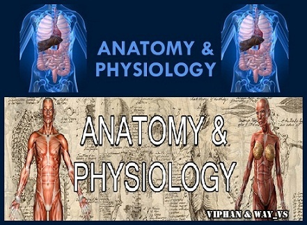 Anatomy And Physiology 2013