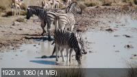 Африка 3D / Faszination Afrika 3D (2011) BluRay + BDRip 1080p