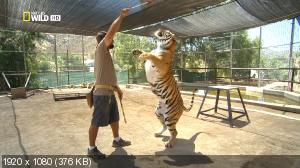 Американский тигр / American Tiger (2012) HDTV 1080i
