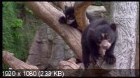 Зоопарки Европы / Les Zoos d' Europe (2007) HDTV 1080i