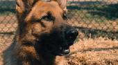 Великолепный пёс / Cool Dog (2010) WEBDLRip